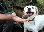 Truffle Hunting with a treat